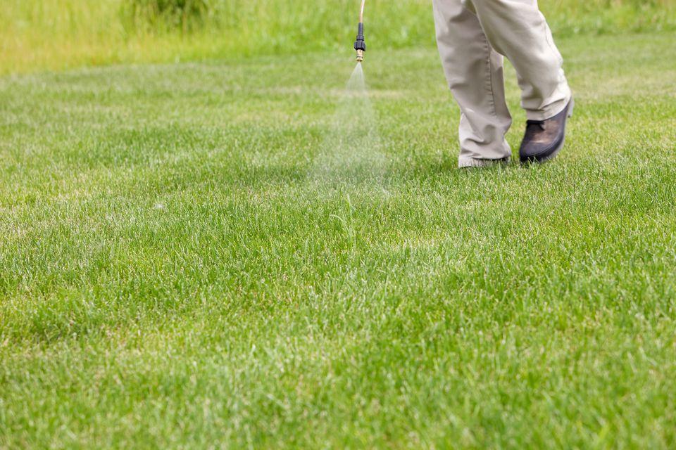Lawn & Turf Programs